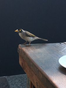 small visitor looking for crumbs