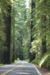 traveling between the redwoods