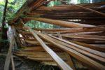 "burst of gigantic ""splinters"" from a tree fallen this season"